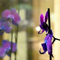 Орхидеи :: Григорий Карамянц