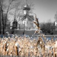 Стебелек на ветру :: Евгений Никифоров