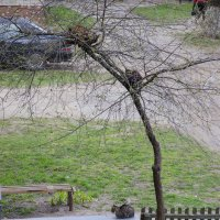 Весна пришла... :: Сергей Хомич