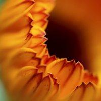Цветок :: Ольга Зотова