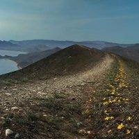 цветочные тропы Киммерии :: viton