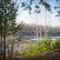 В весеннем лесу :: Евгения Бурлуцкая