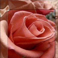 роза :: Мария Климова