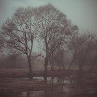 Утро туманное... :: Митя Шишкин