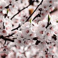 Немного весны... :: Андрей Артемьев