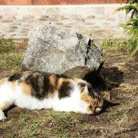 Пригрелся на солнышке... :: Natalisa Sokolets