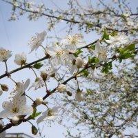 Весна пришла :: Руслан Грицунь