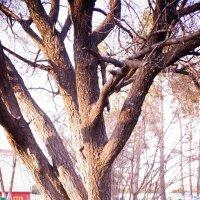 деревце :: Кристина Урманова