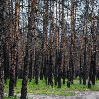После пожара... :: Сергей Афанасьев