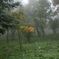 Туман :: Ольга Волкова
