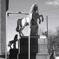 Диоскуровы кони :: sv.kaschuk