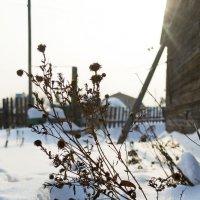 Морозный день :: Дарья У.