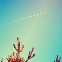 Полетели в небеса.. :: Алина