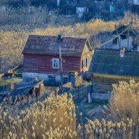 Камышовая долина3 :: Aine Lin