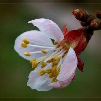 Весна :: Андрей Власов
