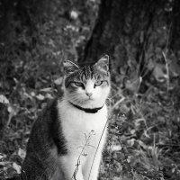 агент кот :: Дарья Метелина