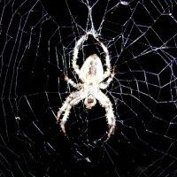Паук в паутине :: dron doc