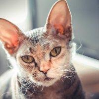 Животное_1 :: Sonya Nova