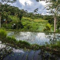 Бали,просто Бали... :: Александр