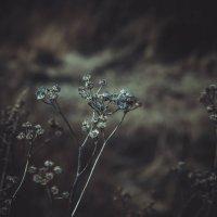 Стеклянные цветы :: Дмитрий Кудряшов