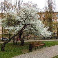Уютный уголок :: Ольга Дувалкина