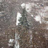 Весенний снегопад. Может быть и последний до следующей зимы. :: Михаил