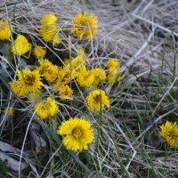 весенние цветы... :: Михаил Столяров