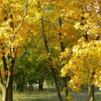 Осень в Моспино )) :: Viktoriya Savostyanova
