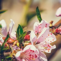 Весна, весна! :: Rasul Narimon o'g'li