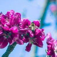 Поспеши, Весна! :: Rasul Narimon o'g'li