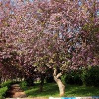 весна :: evgeni vaizer