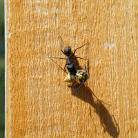 насекомые Казахстана :: Марат Номад