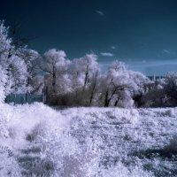 Пейзаж в инфракрасном свете :: Александр Сысоев