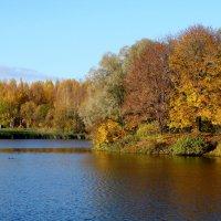 Пруд осенью :: Владимир Гилясев