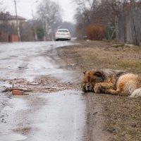 Собачья жизнь :: Юрий