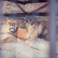 Минский зоопарк :: Константин Король