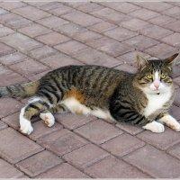 Монастырский кот. :: Роланд Дубровский