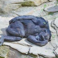 После обеда можно и поспать по-человечески. :: Виталий Половинко