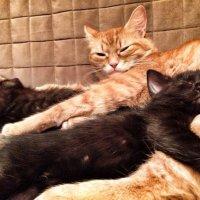 Пять котят спать хотят, а шестой не спит! Хвостиком виляет, да ешё и лает. :: Ольга Кривых