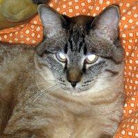 Кот. :: МАК©ИМ Пылаев-Пшеничников