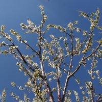 весенние цветы :: İsmail Arda arda