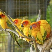 птицы Бали :: Galina G