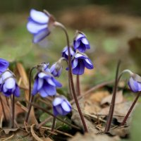 весна! :: александр пеньков