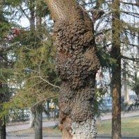 странное дерево.. :: NюRа;-) Ковылина