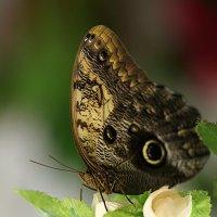Мир бабочек :: Елена Федорова