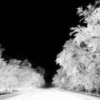 В зимней темноте :: Andrei Kostikin