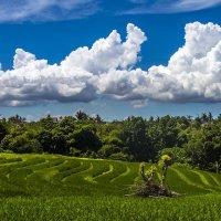 облака на зависть пейзажистам) :: Александр