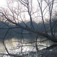 Старое дерево) :: Тарас Золотько