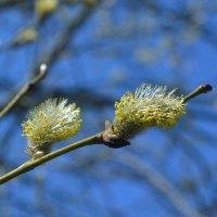 весна.. :: Надежда .....