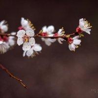 весна :: Надежда Степанюк